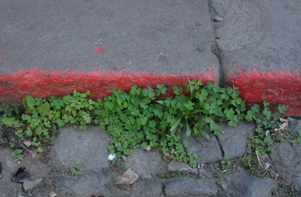 Photo of weeds growing in an old street.
